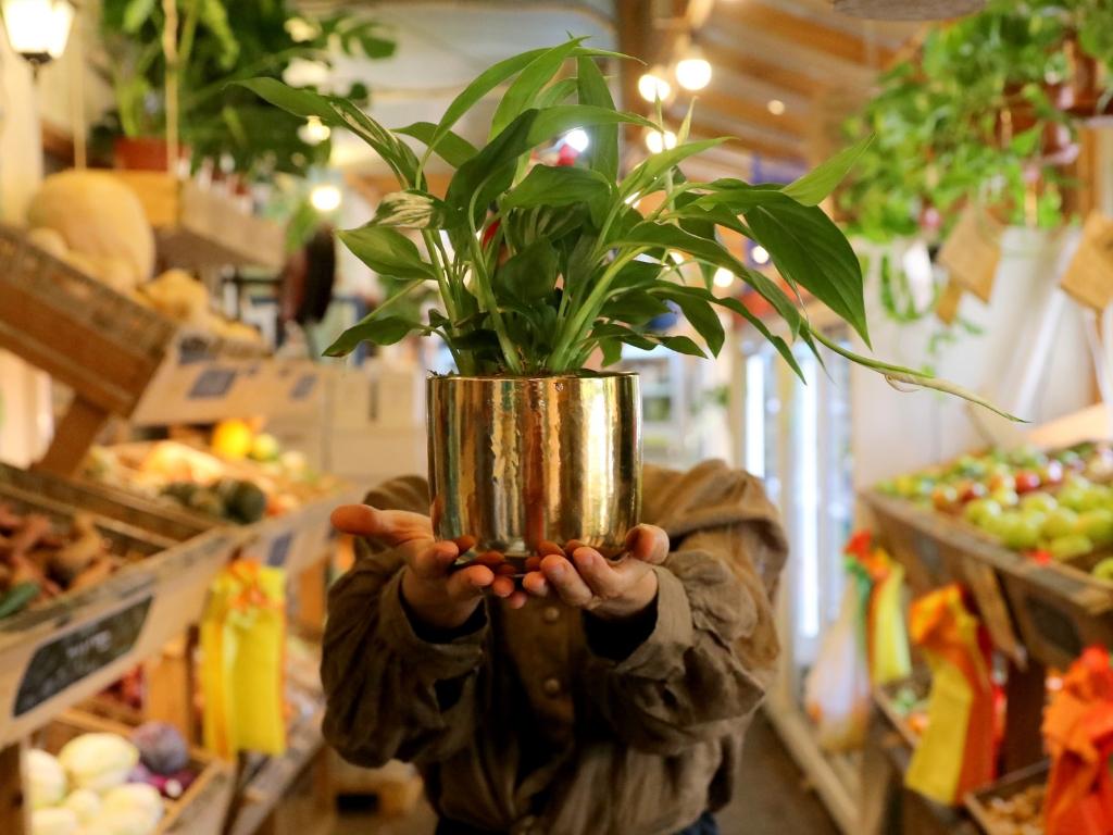 ספטיפיליום peace lily נהדר בהחלט