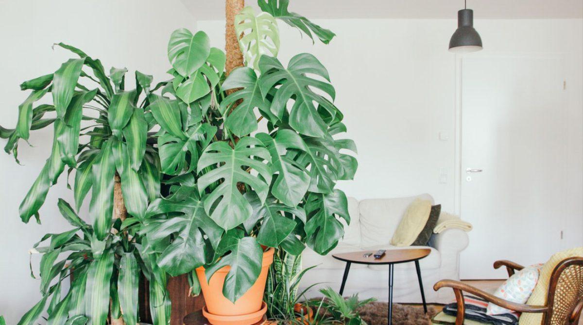 העקרונות החשובים להצלחת צמחי הבית שלכם.
