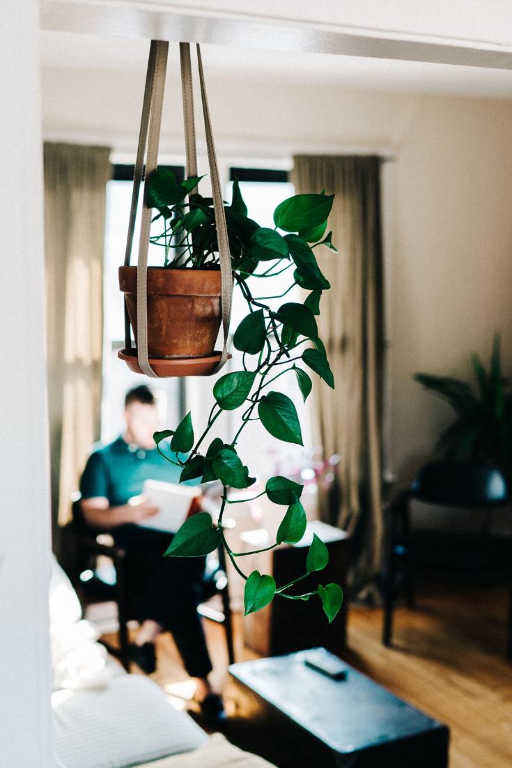 פוטוס צמח בית האולטימטיבי