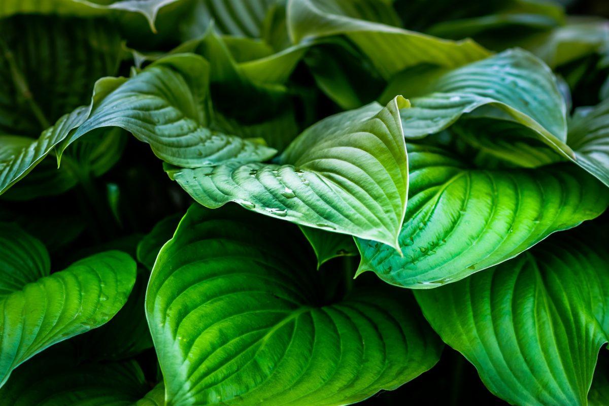 עלים ירוקים חיים