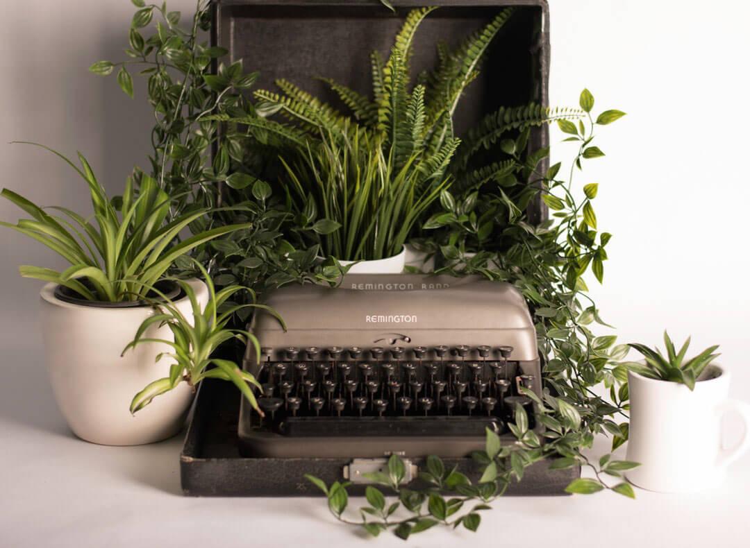 חמישה צמחים קלים במיוחד | או: לא כל ההתחלות קשות