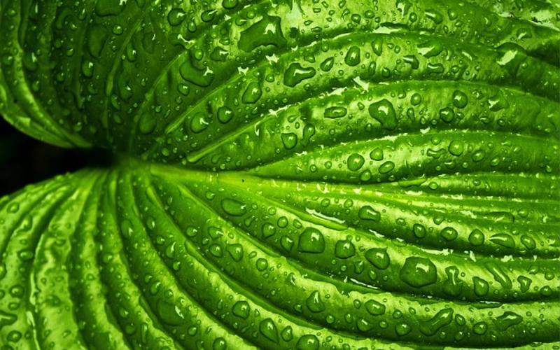 קחו נשימה | המדריך לצמחי בית מטהרי אוויר