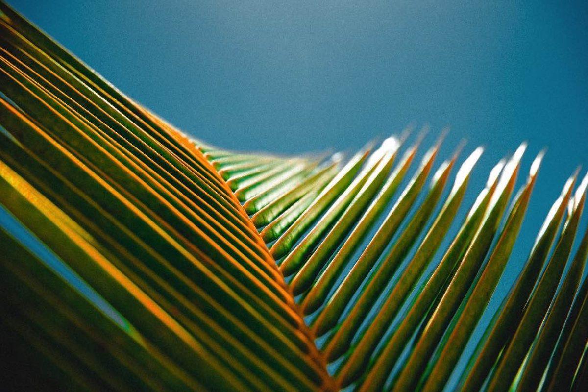 צמח דקל טרופי מסתכל אל השמיים